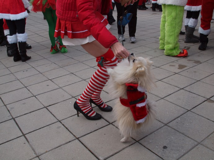 How cute is this Santacon dog?