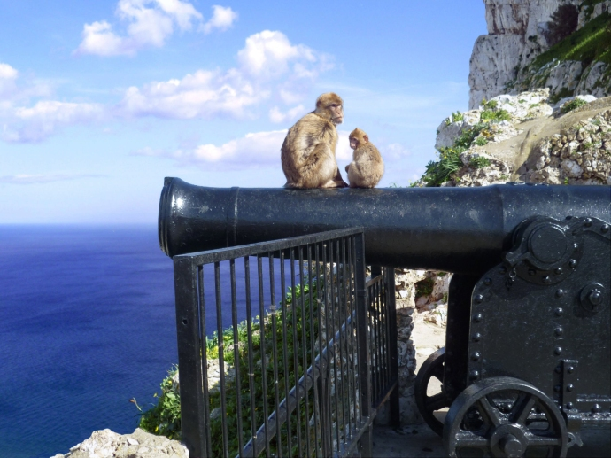 Cliffside monkeys on the Rock of Gibraltar